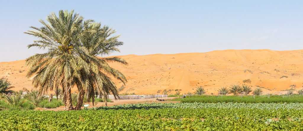 UAE TURNS HYDROPONIC TO BOOST FOOD SECURITY