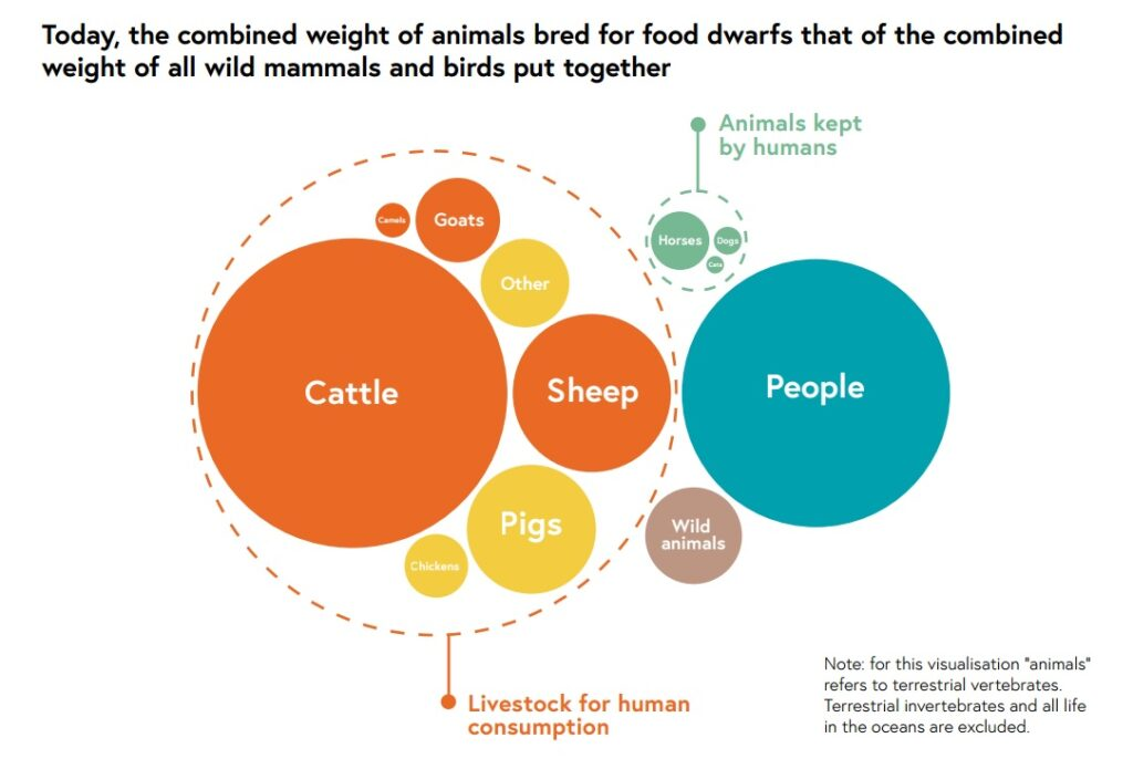 Food strategy and animals
