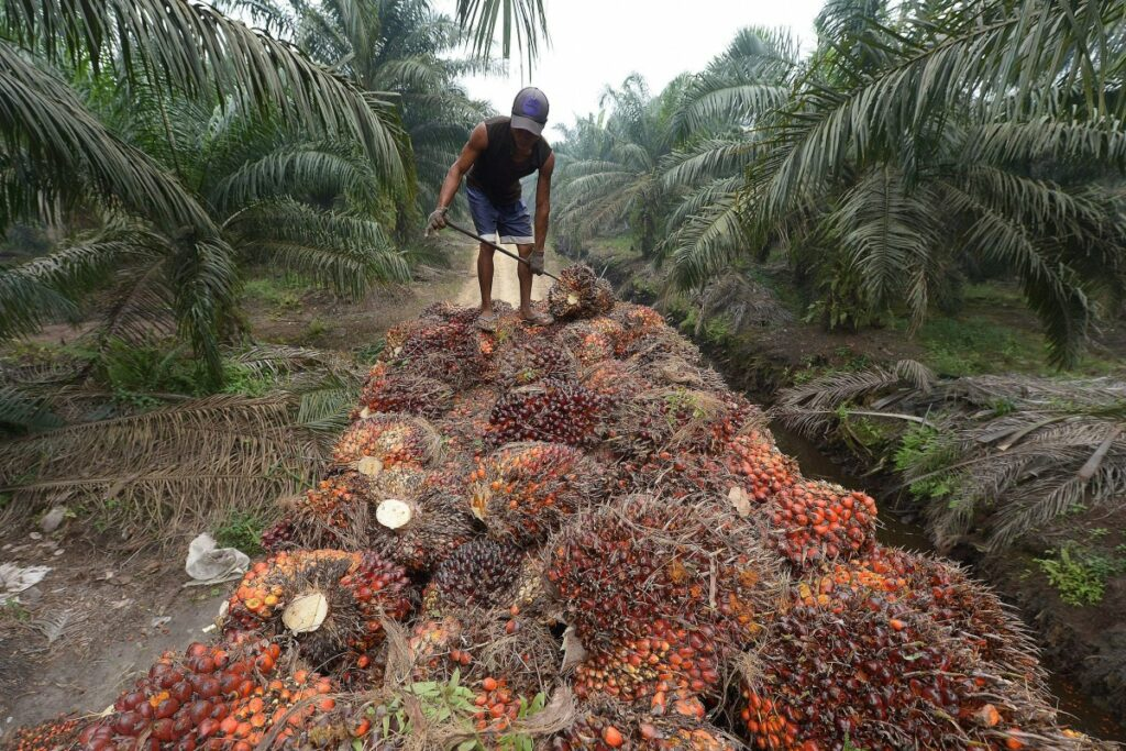 RELEAF OFFERS RELIEF TO NIGERIA'S OIL PALM FARMERS AS IT SECURES $4.5M IN FUNDING